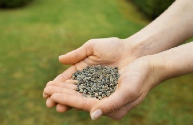 La chía ayuda a la digestión y a reducir niveles de colesterol en el organismo. (Foto: Thinkstock)