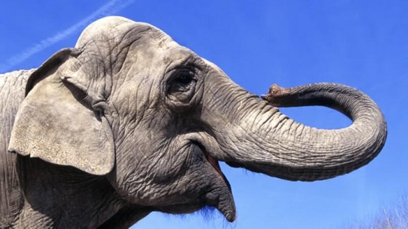 rostro de un elefante