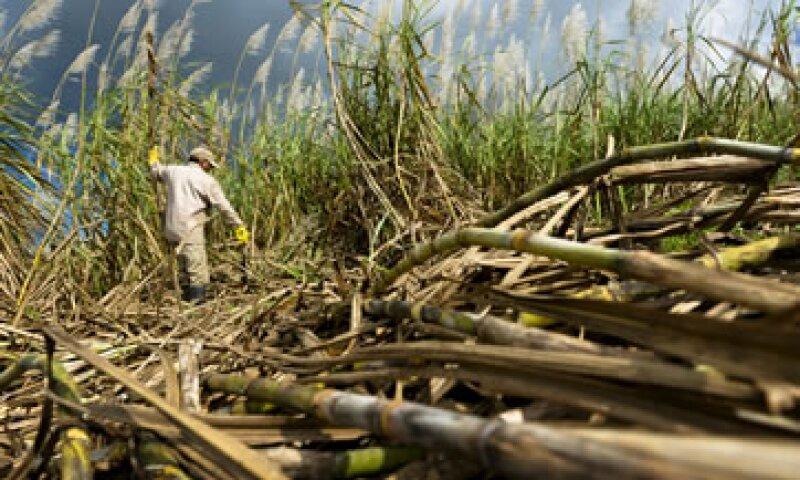México no tiene restricciones a la inversión extranjera en el sector azucarero. (Foto: Getty Images)