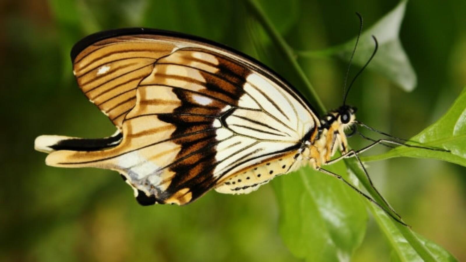 mariposas tanzania insectos especies 03