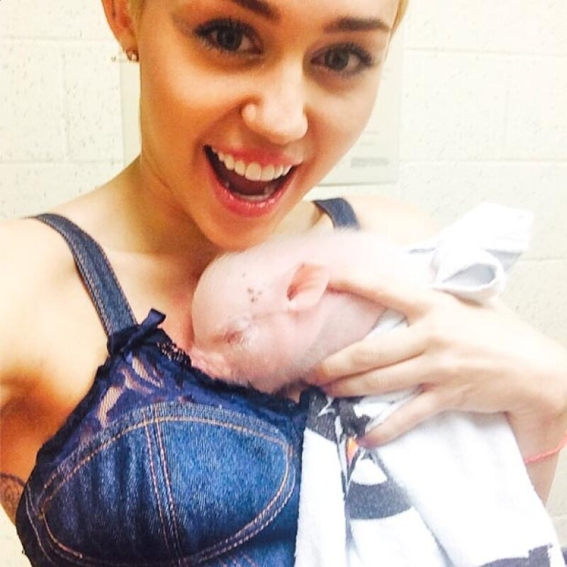 Miley Cyrus ha adquirido esta adorable cerdita y no dudó en presumirla en Instagram.