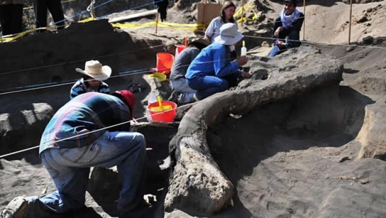 fosil de mamut en milpa alta