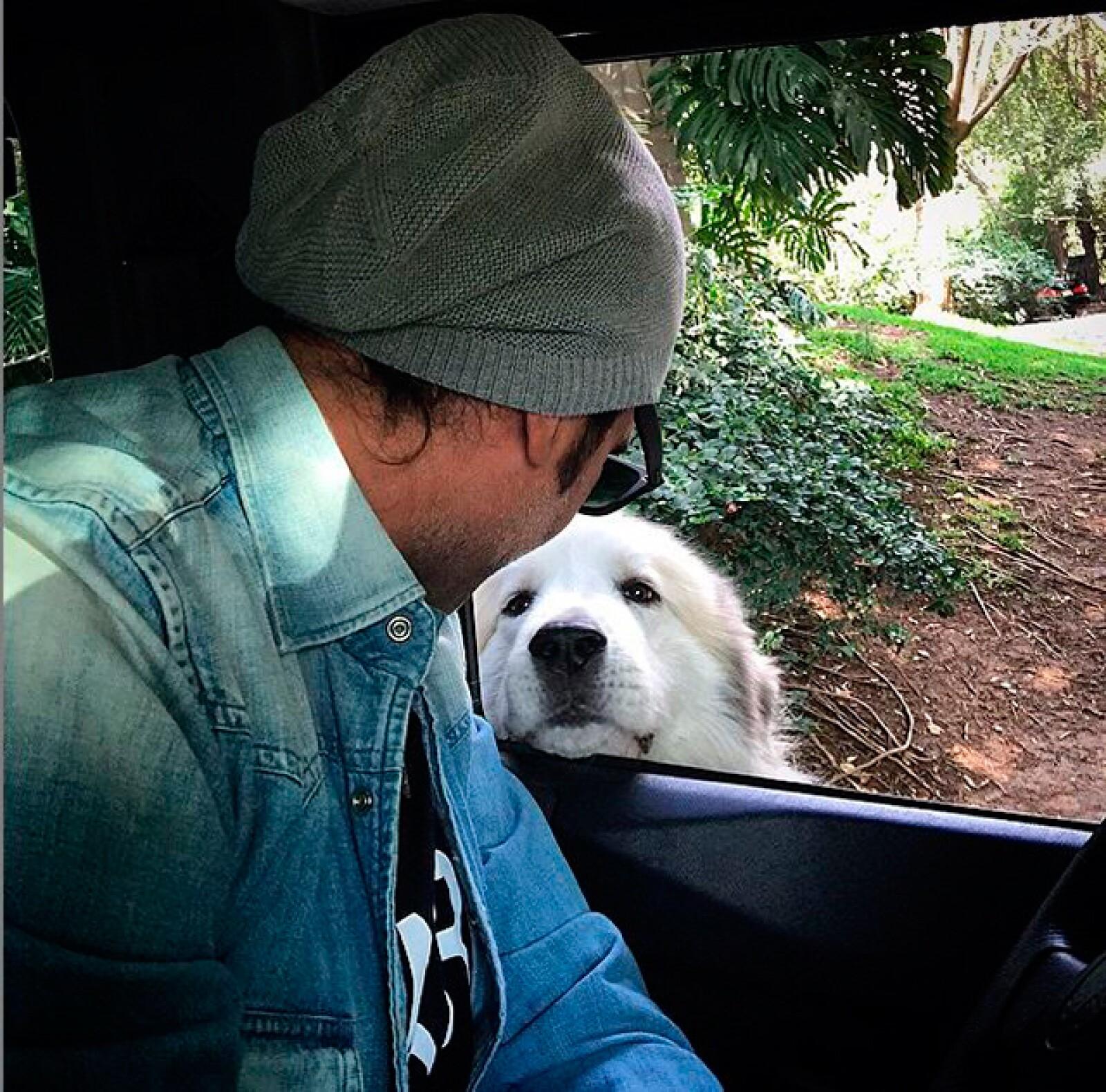 Alejandro gusta de compartir hermosas fotografías junto a sus perros.