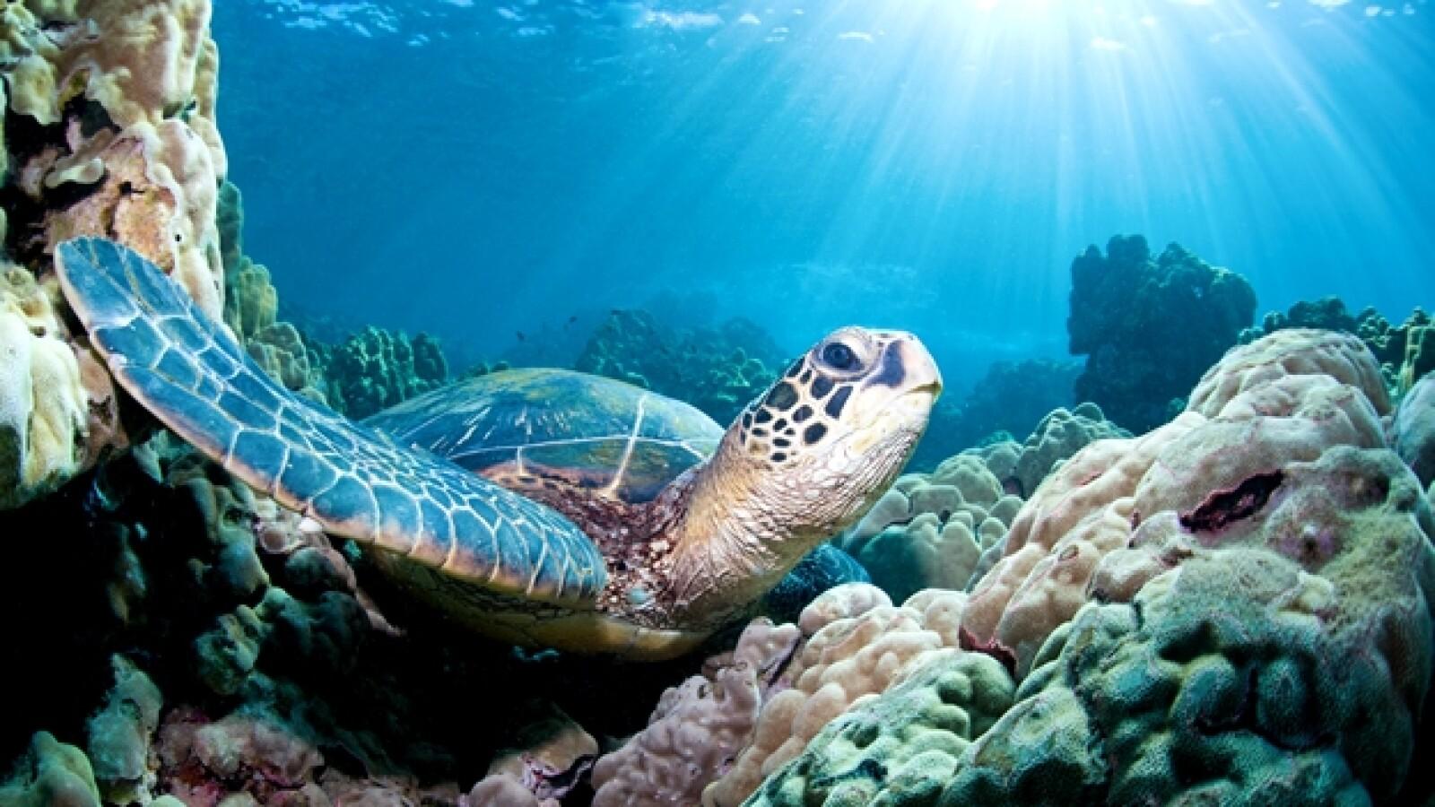 dia mundial de los oceanos 04