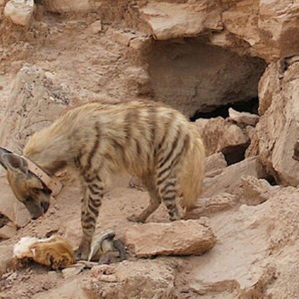 hienas guepardos reserva natural