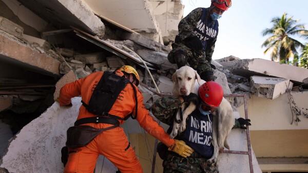 Mascotas rescatadas sismo