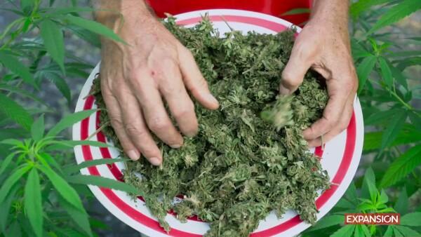SECTUR legalización Marihuana