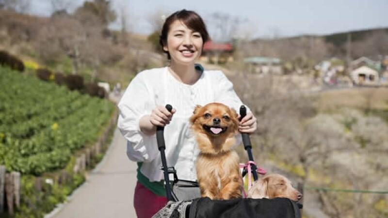 una mujer lleva a sus perros en una carriola