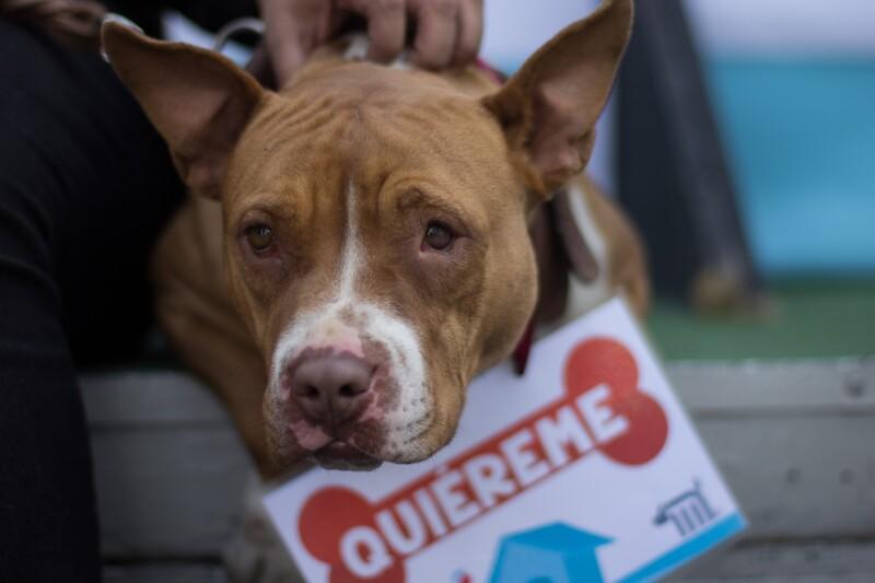 perritos calle adopción