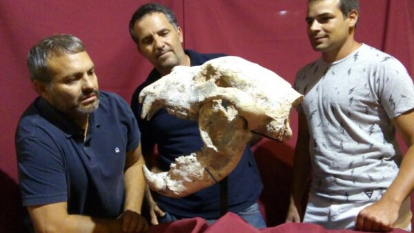 ARGENTINA-PALAEONTOLOGY-GIANT BEAR