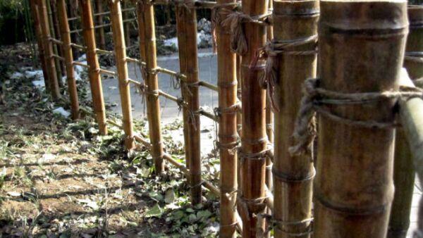 bambú_generico