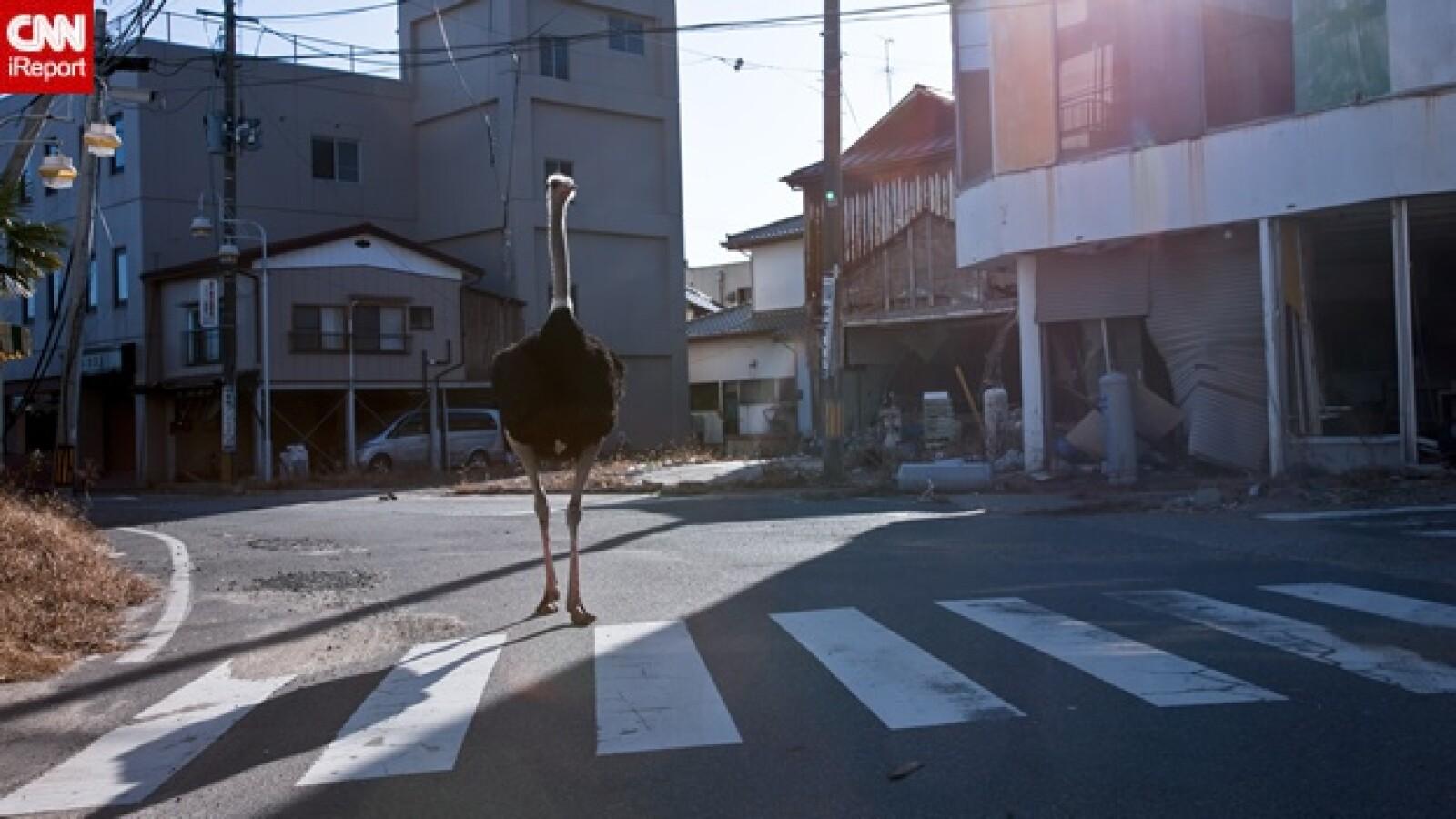 irpt-fukushima10