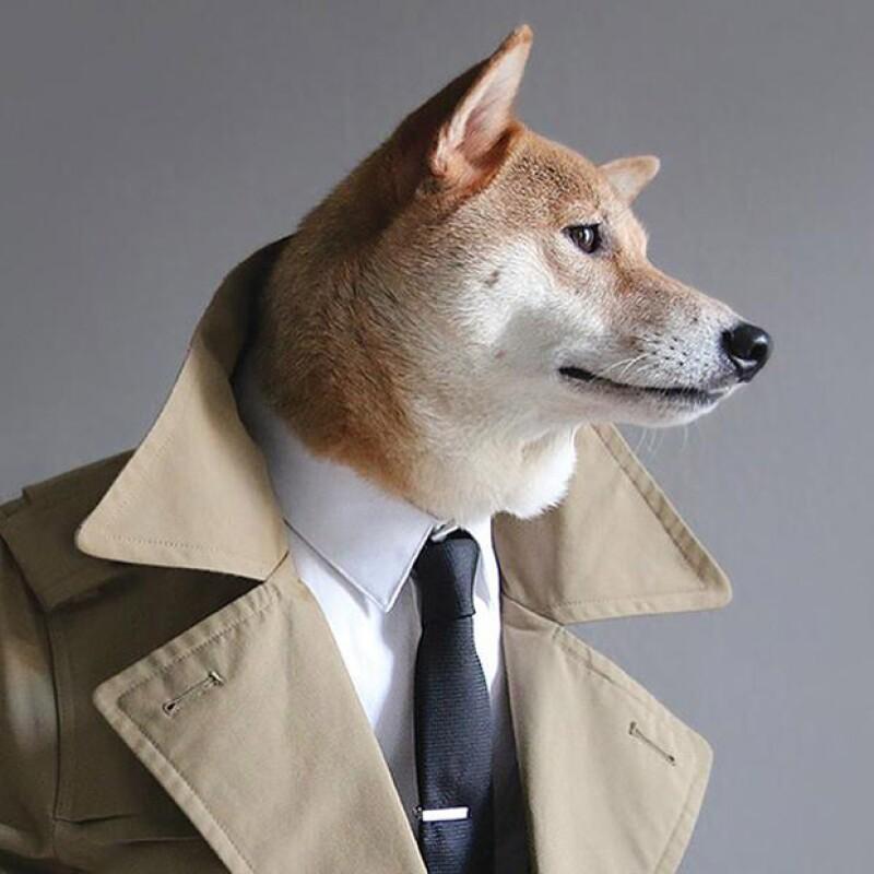 El canino neoyorquino que se ve fabuloso con cualquier atuendo para el género masculino, tras ser fenómeno viral, la mascota ahora cuenta con una guía sobre el buen vestir.