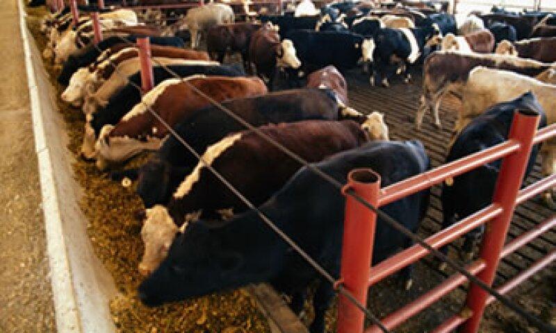 El 5 de abril pasado, el servicio fitosanitario ruso indicó que se bloquearía a cerca del 80% de las firmas importadoras de carne mexicana.  (Foto: Getty Images)