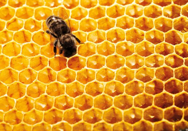 abejas-guerlain-día mundial-miel-skincare-iniciativas-bees-2.jpg