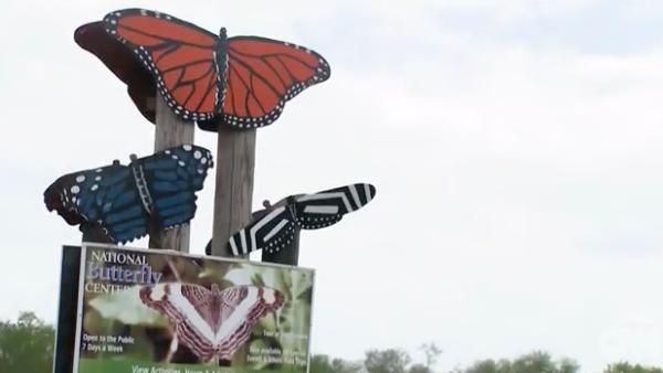 Cientos de mariposas podrían ser afectadas por el muro fronterizo de Trump