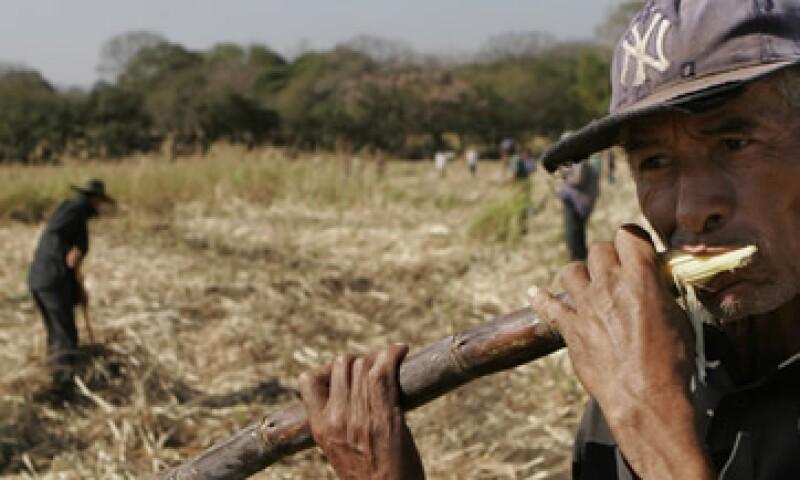 Para el 80% de los pequeños agricultores de México la empresa representa la primera puerta de acceso al crédito formal.  (Foto: AP)
