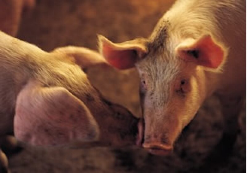 México ha dicho que el sector exportador de carne está afectados por la incertidumbre que generó el etiquetado. (Foto: Jupiter Images)