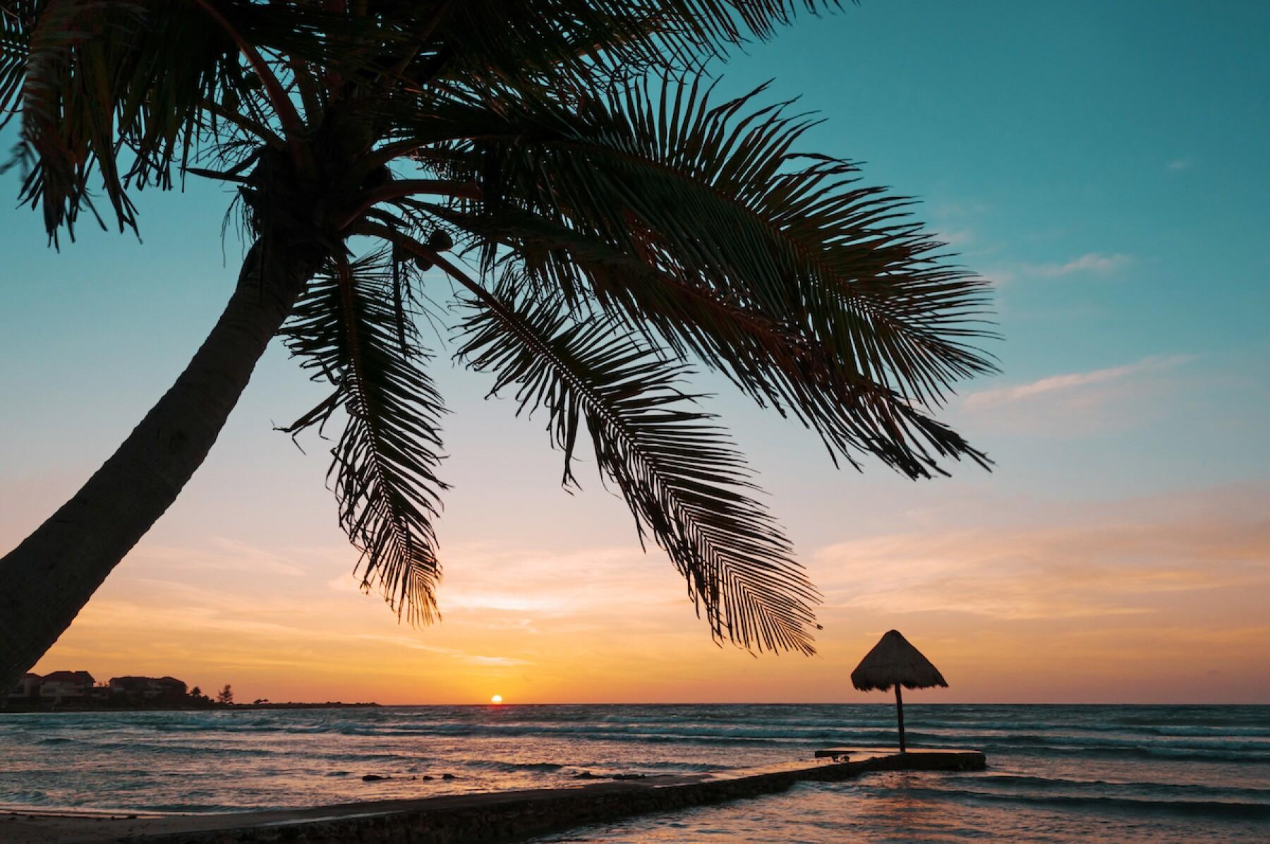 Palapa and palm tree on tropical beach at sunrise, Mayan Riviera, Mexico, Puerto Aventuras