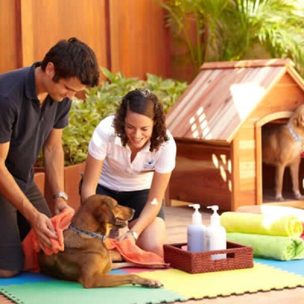 Los perros reciben atención especial por parte de los huéspedes.