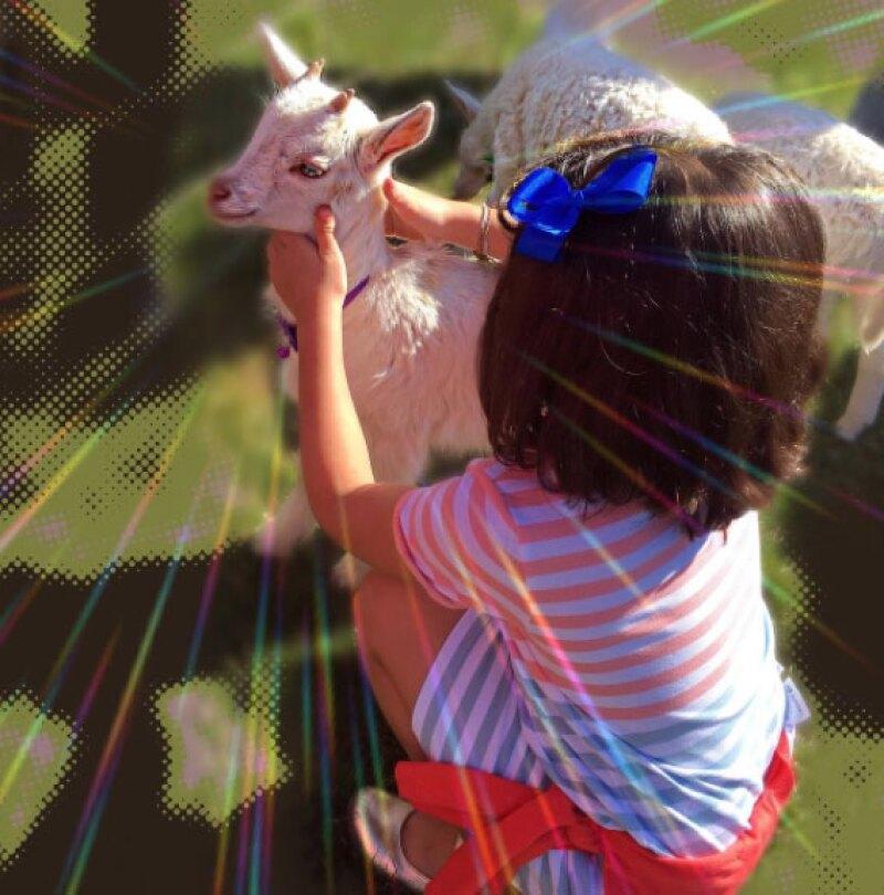 La pequeña Sabrina también disfrutó de alimentar a una cabra bebé.