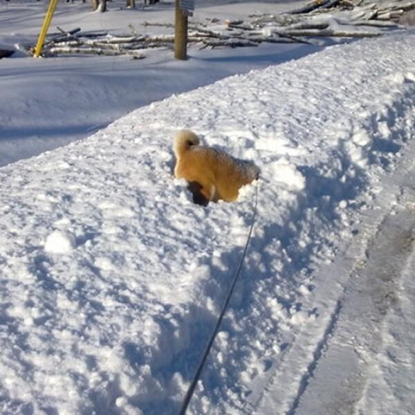 ireport mascotas nieve EU 05