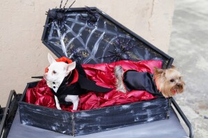 Mascota en Halloween