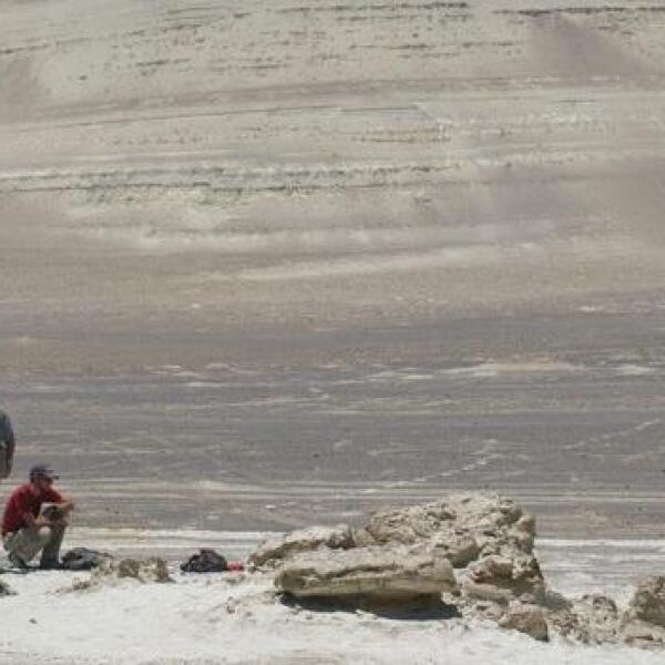 cientificos leviatan ballena peru excavacion