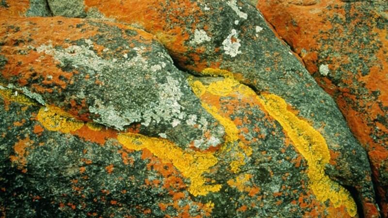 liquenes en rocas