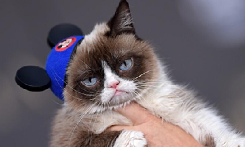 Grumpy Cat tiene una película en su currículum e incluso una marca de café. (Foto: Getty Images)