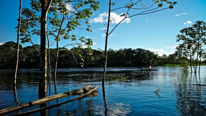 Amazonia vida silvestre