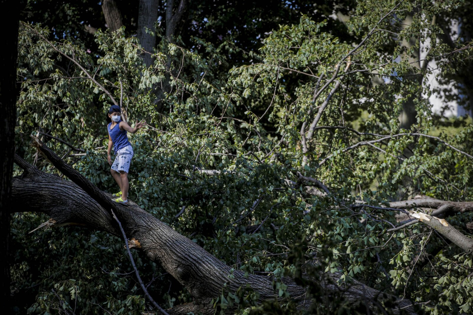 A boy climbs on downed trees in the aftermath of Tropical Storm Isaias in Astoria Park in Queens, New York