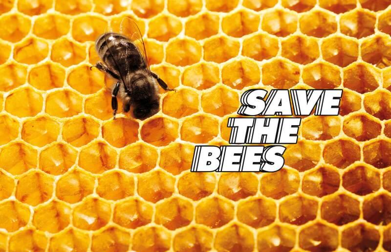 abejas-guerlain-día mundial-miel-skincare-iniciativas-bees copy