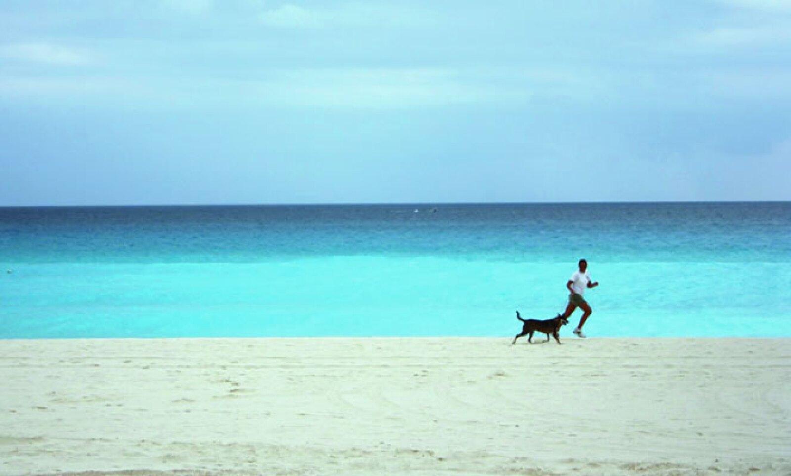 Según el hotel, se estima que en México existen más de 30 millones de perros callejeros.