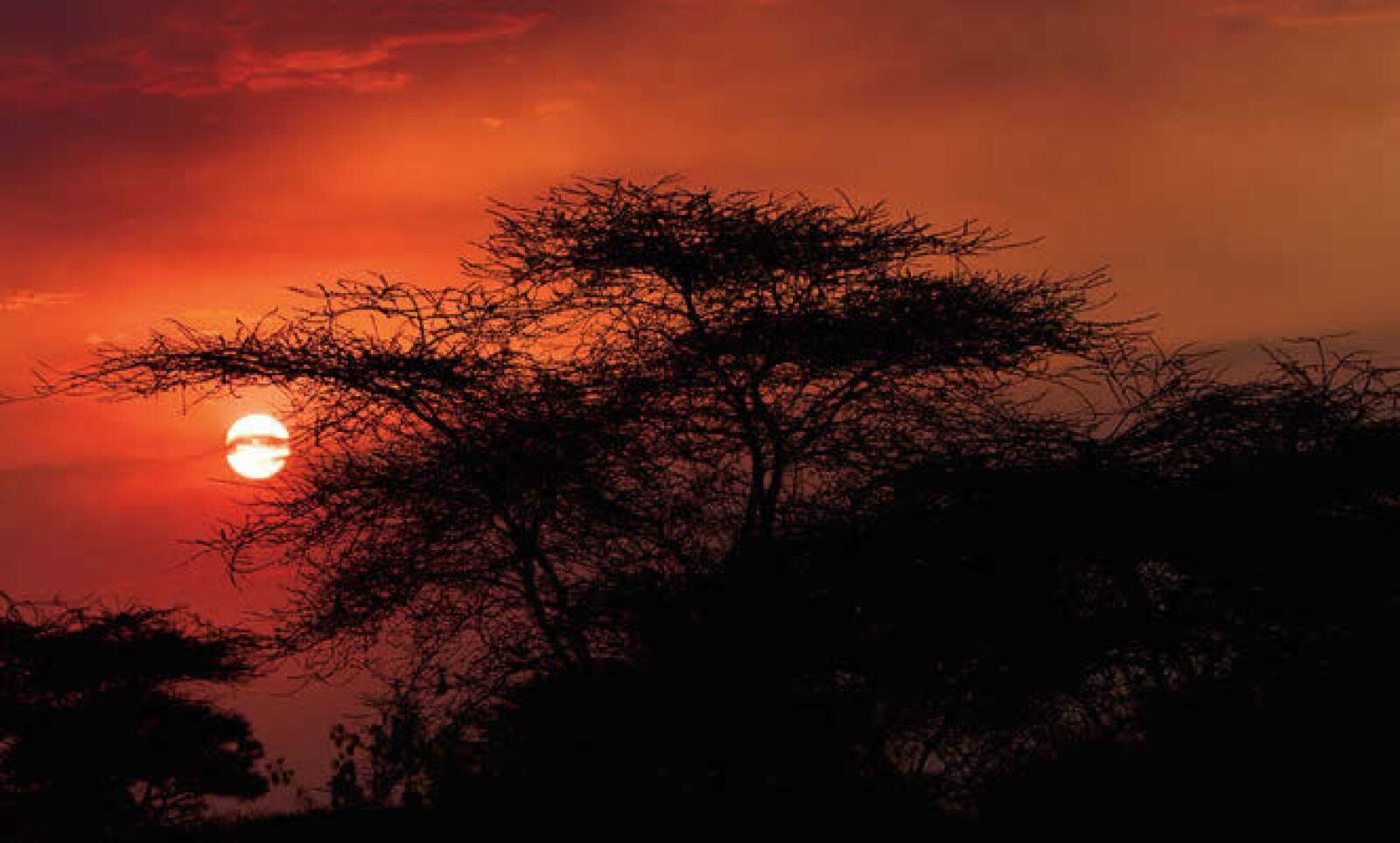 La reserva nacional del Ngorongoro, en Tanzania, está a menos de 100 kilómetros del parque nacional del Serengueti. Está enclavada en un antiguo cráter donde abunda la vida salvaje.