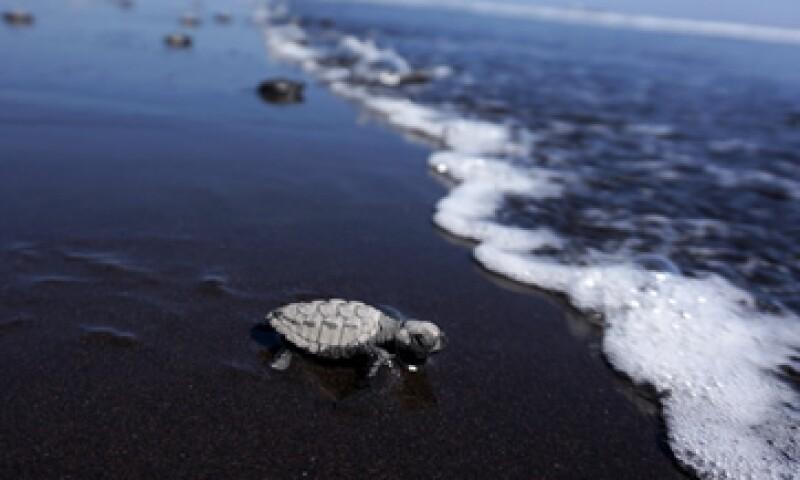 Hasta el momento, se desconoce con exactitud la aportación del mar a la economía mexicana. (Foto: Reuters)