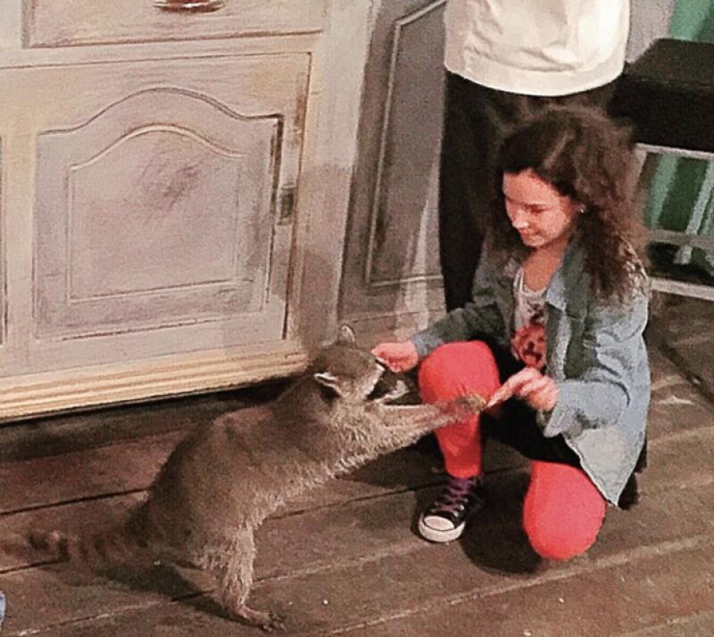 Mía visitó a los mapaches de un refugio.