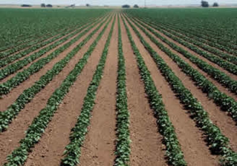El Gobierno estima una producción de hasta 95 millones de toneladas de granos. (Foto: Jupiter Images)