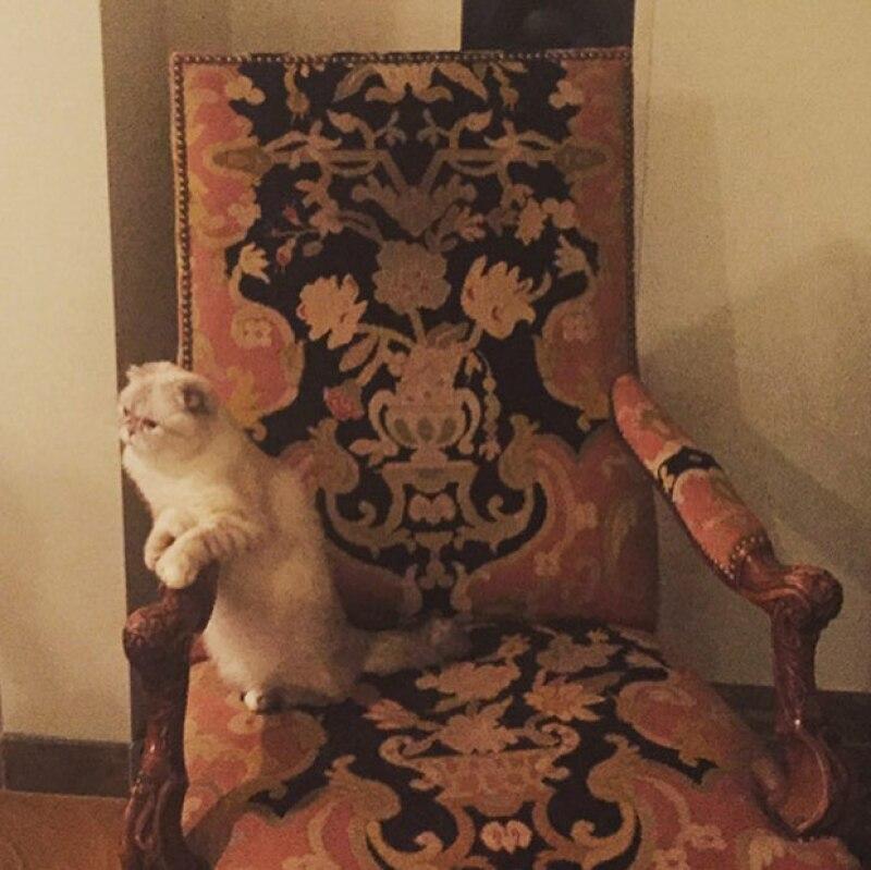 Las gatitas de Taylor son sus más grandes amores.