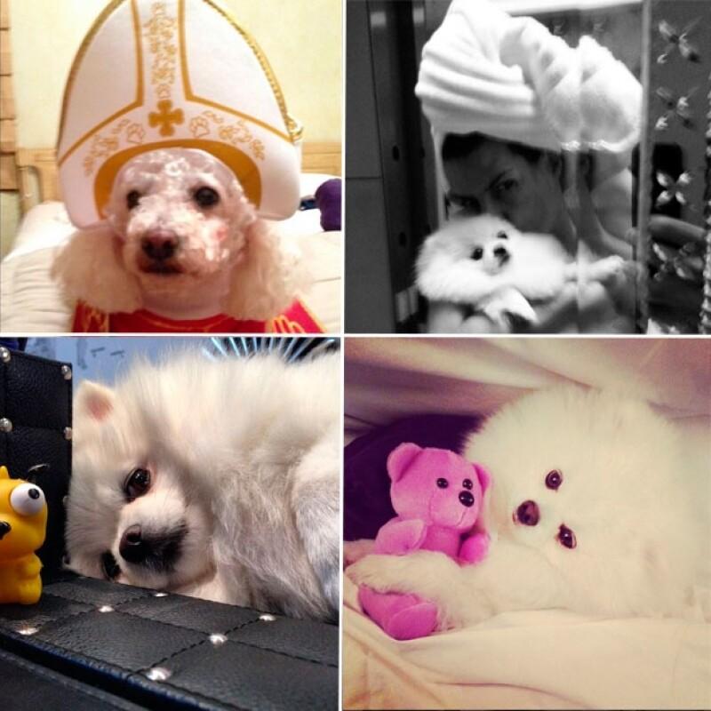 La conductora presume orgullosa a su perrita Brooke quien lleva un interesante estilo de vida, tal como su famosa dueña.