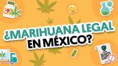 ¿Legalización de la marihuana recreativa en México? | #QueAlguienMeExplique