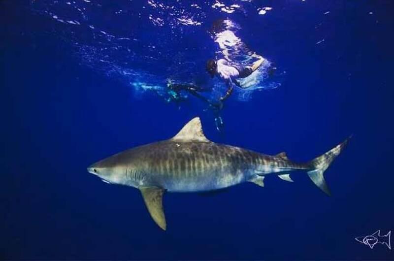 El actor que se encuentra filmando su próxima película en Hawái compartió un video en el que vemos el momento en el que se sujeta de un tiburón y nada a su lado.
