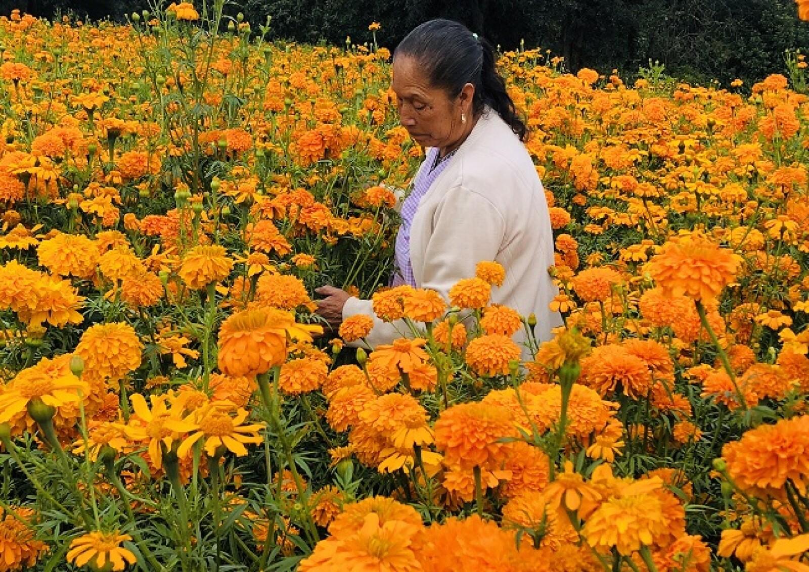 flores de cempas�chitl 5