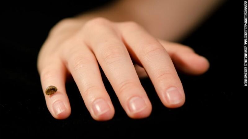 finger bone hueso neandertales