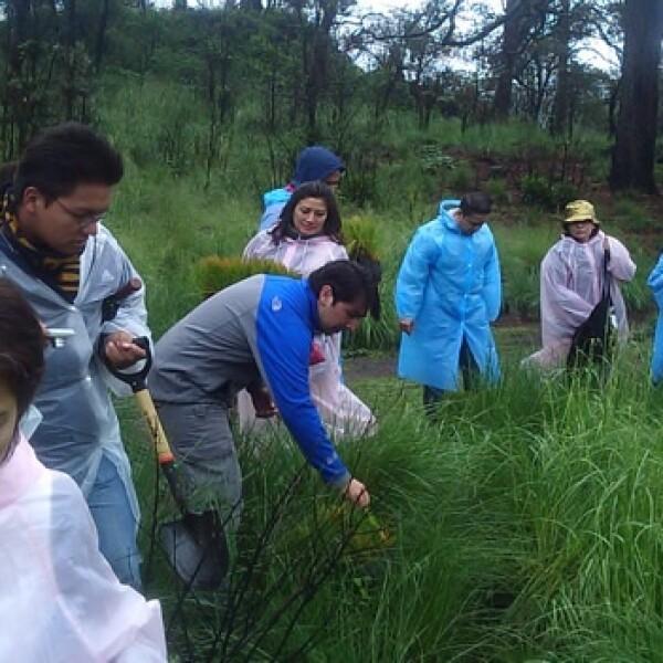 irpt-reforestacion1