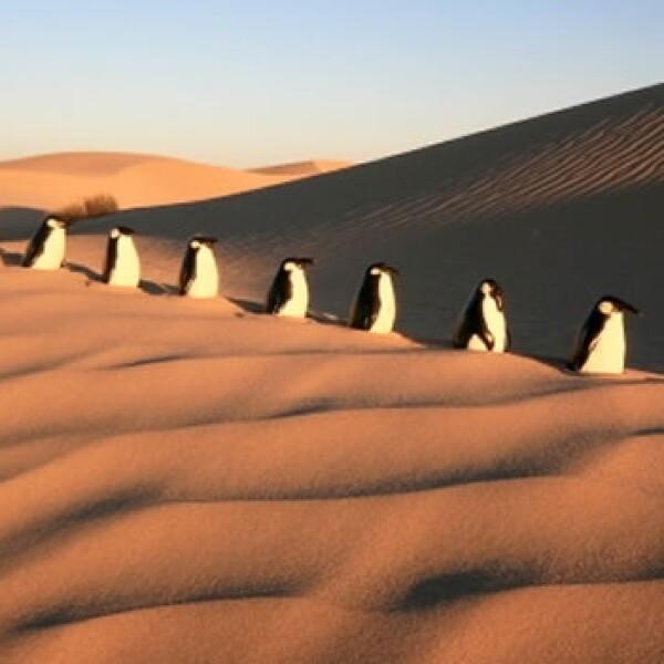 pinguinos centigrados y paralelos