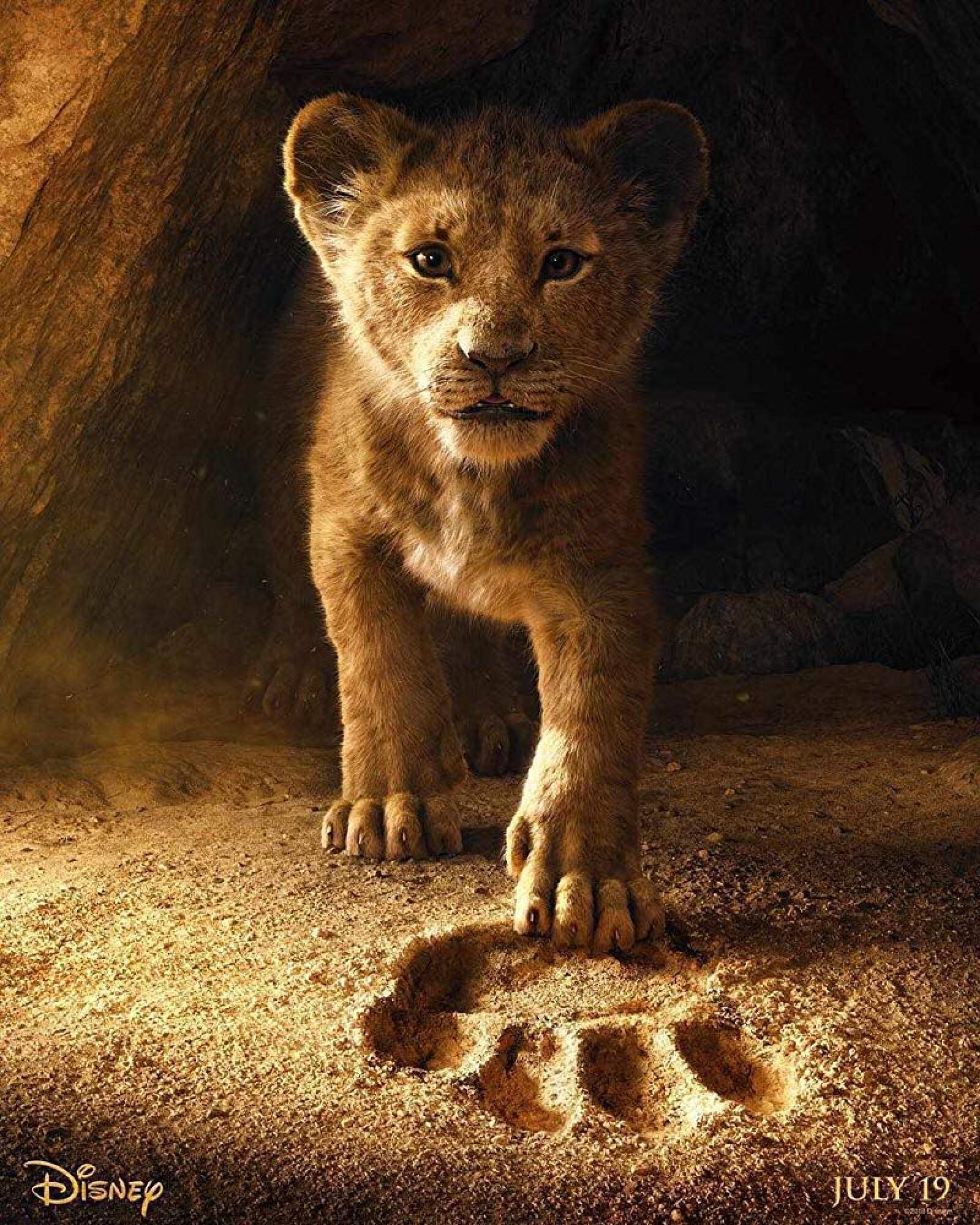 el rey leon JD McCray fotografo
