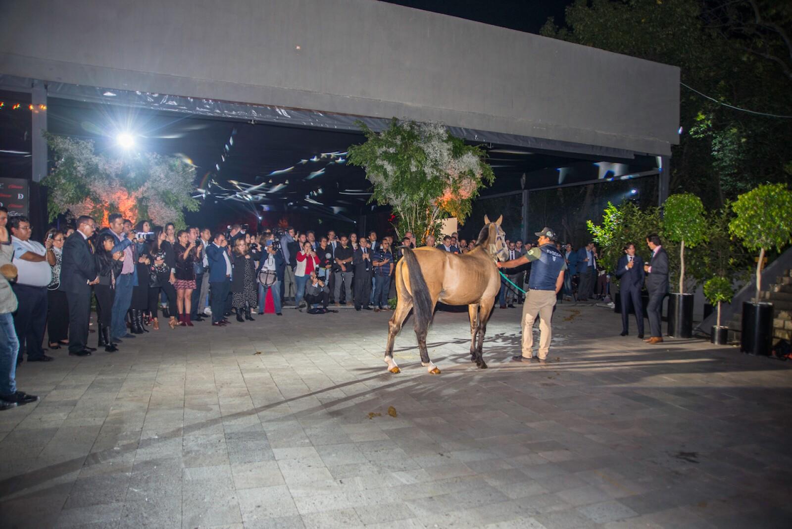 Presentando a los caballos en el Jatdín Lomas Altas.JPG