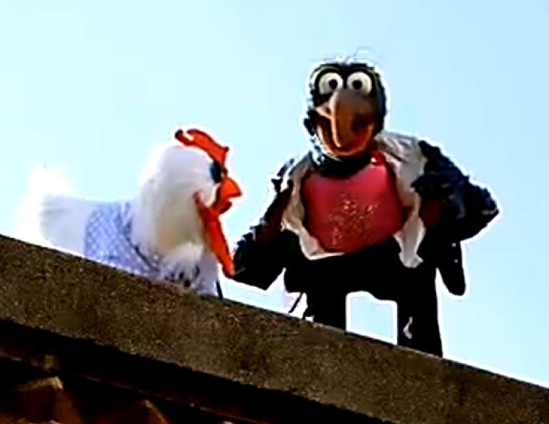 La gallina Camila acompaña a donde quiera que vaya a su querido Gonzo.