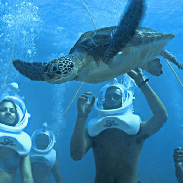 """El Snuba de Arrecife te llevará a bordo de una embarcación a uno de los arrecifes cercanos al parque llamado """"Barracuda"""" que cuenta con una gran diversidad de peces tropicales y tortugas."""
